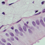 histological stainings