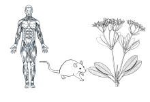 human animal plant models